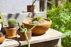 Many small cactus stock photos