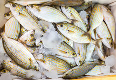 Many small caught dead fish with ice on market. Many little caught dead fish with ice on market Stock Images