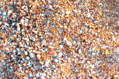 Many small cockleshell on the sea coast Stock Images