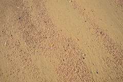 Many small crack shell on sand, for background Royalty Free Stock Images
