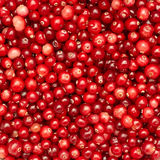 Many small cranberry berries Stock Image