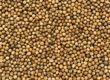 Many small dried coriander seed. Food spicery backgrounds Royalty Free Stock Photography
