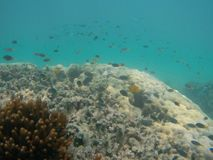 Many small exotic marine fish swimming over coral reef stock photos