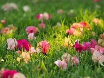 Many small flowers on a ground. Many small colourful flowers on a ground Stock Photo