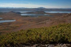 Many small lakes and taiga dead. Royalty Free Stock Photos