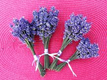 Small lavender bouquets bind and dry. Many small lavender bouquets bind and dry royalty free stock photography