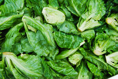 Many of small lettuce in fresh market Royalty Free Stock Image