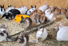 Many small rabbits Stock Photo
