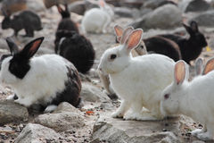Many small rabbits Stock Images