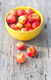 Many small red apples Royalty Free Stock Photography