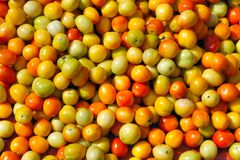 Many small ripe tomatoes. Stock Image
