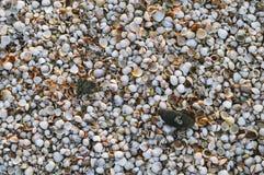 Many small seashells on the seashore background Stock Photography