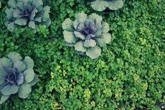 Many small trees or green plants with close-ups in the daytime. For natural backgrounds and wallpapers Stock Photography