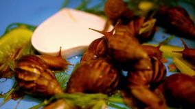 Many snails crawling and eating plants. Macro. Video shift motion 1920*1080 stock footage