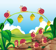 Many snails crawling in garden vector illustration