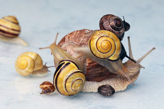 Many snails on a heap Royalty Free Stock Images