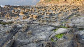 Unique rocks. The unique landform and great landscape of Taiwan north coast royalty free stock photography