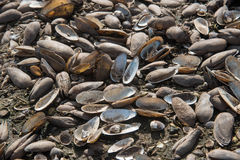 Many species of shell debris pile at Krasiao dam Stock Images