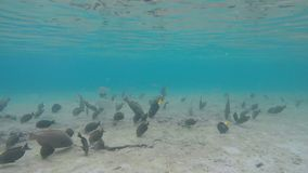 Many species of tropical fish swim under water. Near the coral reef stock video footage