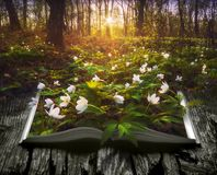 Many spring flowers on the pages of an open book. Many spring flowers on the pages of an open magical book in a deep fairytale forest. Nature concept Stock Photos
