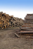 Many stacked pine logs side view Stock Photo