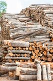 Many stacked wood logs. Outdoors storage. Colored vertical image Royalty Free Stock Photo