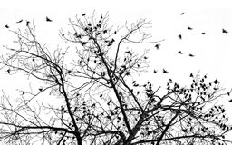 Many starlings Stock Photography