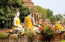 Many statues of Buddhas Royalty Free Stock Photo