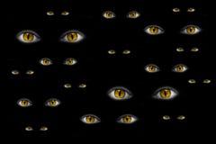 Many strange yellow eyes Royalty Free Stock Image