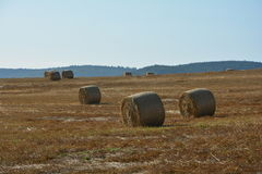 Many Straw bales lie in a landscape. Many hay bales lie in a landscape with sky stock photo