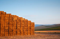 Many straw or hay bales stacked on a big pile Stock Photo