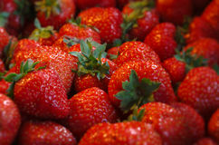 Many strawberries on a pile. Macro shot with shallow depth of field Stock Photos