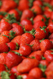 Many Strawberry Close Up Stock Images