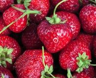 Many Strawberry at day Royalty Free Stock Photos