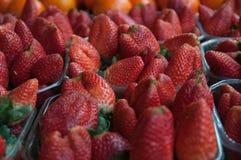 Many strawberry Royalty Free Stock Photo