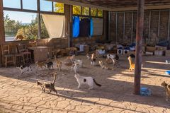 Many stray. Cats are dirty, they get sick, cats need a vet and a new home. Many stray cats against a brick wall. Cats are dirty, they get sick, cats need a vet stock photography