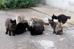 Many stray cats sit against the wall on the asphalt.  Royalty Free Stock Photography