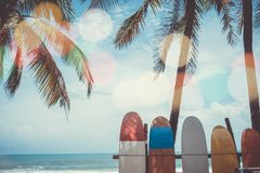 Many surfboards beside coconut trees at summer beach. stock photos