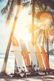 Many surfboards beside coconut trees at summer beach with sun light . royalty free stock photo