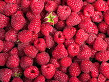 Many sweet fresh raspberry fruit. Closeup view background Stock Images