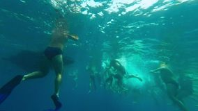 Many swimmers in the sea stock footage