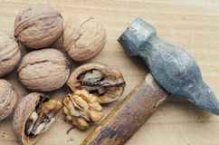 many table walnuts Стоковые Фото