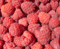 Many tasty fresh raspberry closeup Royalty Free Stock Photo