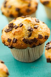 Many tasty homemade vanilla muffins with chocolate chunks on bri Royalty Free Stock Photo