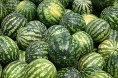 Many tasty water-melons Royalty Free Stock Photos