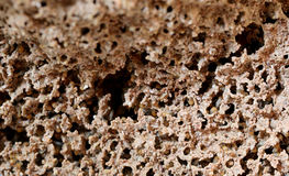 Many termite in nests. Stock Image