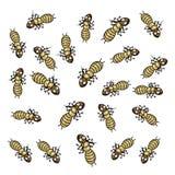 Many termites Stock Photo