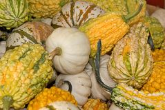 Many Textured Gourds Stock Image