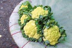 Many thai cabbage Stock Photos