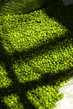 Many thai green pepper Stock Image
